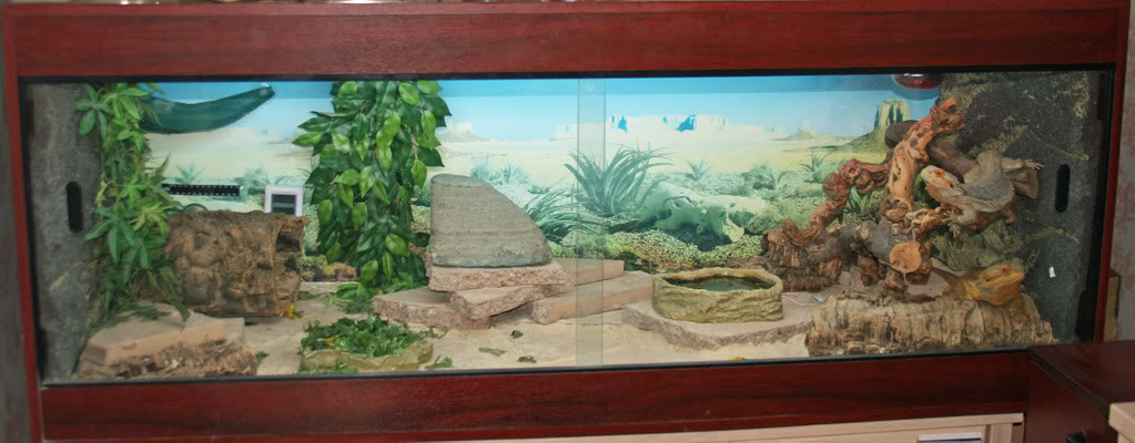 Substrate For Bearded Dragons Suitable Flooring For Vivarium